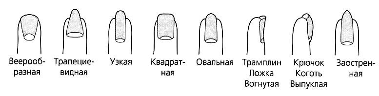 виды пальцев.png